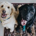 3 Ways to Effectively Remove Pet Stains